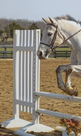 Aldie Equestrian Center Llc Untitled